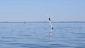 En västremmare i ett blått, somrigt skärgårdshav. Några sjöfåglar guppar längre ut på vattnet.