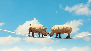 Noshörningar balanserar på ett rep