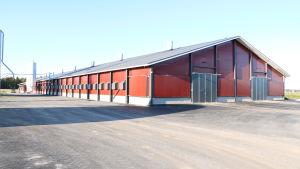 En 4000 kvadratmeter stor kalkonhall. Hallen har röda väggar och svart tak.