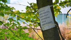 En lapp på ett träd där det står att universitetet tänker fälla trädet för att bygga en parkeringsplats.