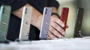 Fem Iphone 11-telefoner i olika färger på rad i ett köpcentrum i Dubai. En person håller i telefonen som är röd. Telefonerna är fotade så att bara baksidan med Apple-logon syns.