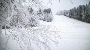 Lumisia puita Kasurilan hiihtokeskuksessa