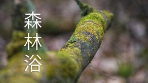 Bild på trädgren med japanska tecken som betyder shinrin yoku.