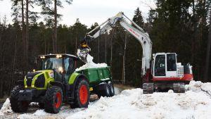 En traktor som har snö i sitt släp. En grävmaskin som för över snö till släpet med skopan.