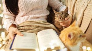 Två katter sitter brevid en kvinna i soffan, hon läser en bok