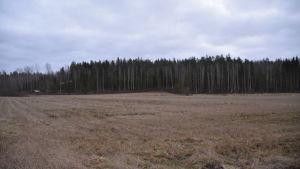 En åker omringad av skog i mulet väder.