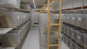 Hyllor fulla med genomskinliga stora plastlådor. I lådorna finns miljontals gräshoppor, men det syns inte på bilden.