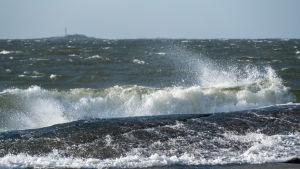 Hård vind vid Varlaxudden på Emsalö i Borgå