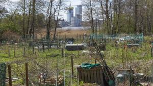 Kivinokan viljelypalsta-alue. Taustalla Kalasataman tornitalot.