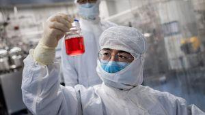 En kinesisk forskare håller upp en flaska med rött innehåll. Forskaren är iklädd vit skyddsdräkt.