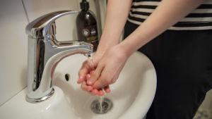 Käsiä pestään