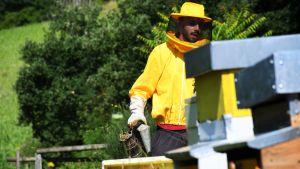 En traditionell rökpustare är ett viktigt redskap för varje biodlare. Luca Bianchi är noga med att det torra gräs han tänder i den är ekologiskt.