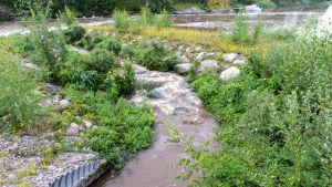 Nyrenoverad fiskväg med tunnel som leder till en å.