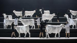Vita kossor och dansare på en scen.