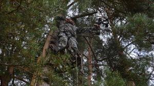 Man står på en ställning uppe vid ett träd och siktar med en pilbåge.