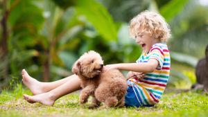 En ljushårig pojke sitter på en gräsmatta och leker med en liten lurvig brun hund.