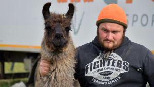 Derek D´Amico tar hand om djuren, här en lama.