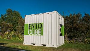 Man kan föda upp syrsor i en sådan här container.