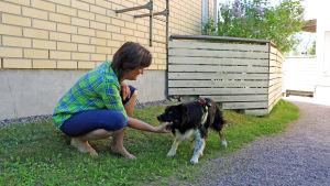 Kvinna som leker med en hund. Hunden håller en tennisboll i munnen.