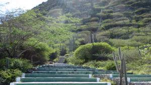 Trapporna vid Hooiberg på Aruba, där King of the Hill-tävlingen avgörs.