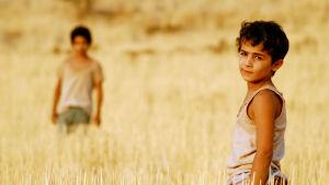 Kaksi poikaa seisoo viljapellossa