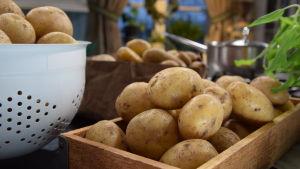 Potatis på bord