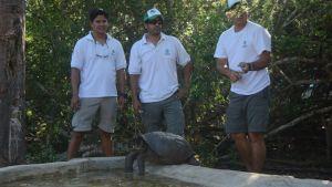 Representanter för Ecuadors miljöministerium och nationalparken på ön Fernandina tar hand om en jättesköldpadda.