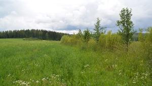 En trädgräns mellan olika åkrar hindrar att det blåser ordentligt och dammar på åkern.