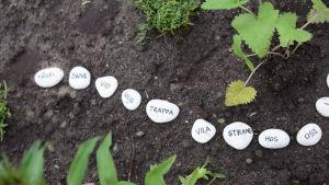 Kivet tekstillä maalla kasvien välillä