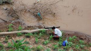 Stora delar av de mestadels branta, bördiga flodbankarna är uppodlade. Dammarna har gjort det svårt att hålla odlingarna i skick.