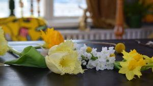Korta snittblommor av tulpan och narciss som ligger på ett bord.