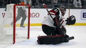 Adin Hill har fått chansen i NHL.