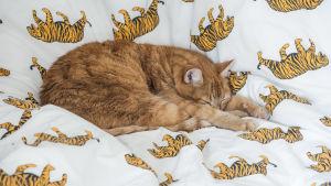 katt ligger på ett täcke med bilder av tigrar