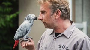 Papegojan Iivo sitter på Pavel Kempfs finger och de tittar på varandra.