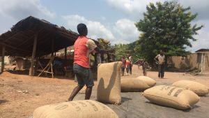 I den lilla byn Elibou i Elfenbenskusten är kakao huvudnäringen.