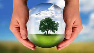 Två händer som håller i en boll med ett träd i.