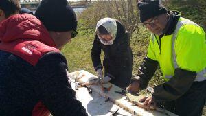 människor rensar fisk