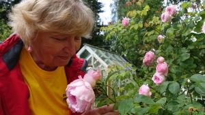 Inger Kullberg doftar på en ljusröd ros.