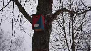 Färgglad fågelholk i ett träd.
