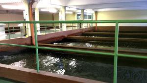 Vattenbassänger där vatten renas