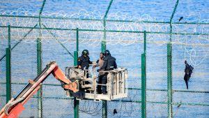 Migranter tar sig över gränsstängslet i Ceuta