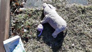 Rosa gris och havegrynspaket på gård.