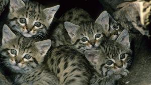 Kissanpentuja kasassa