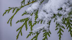 snöfall