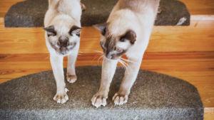 Två katter sträcker på sig.
