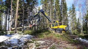 Skogsmaskin avverkar skog.
