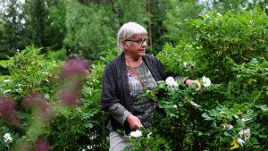Märtha Vesterback står inne i en rosenbuske.