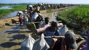 Flyktingar från den muslimska minoriteten rohingya på väg till ett flyktingläger i Bangladesh 3.11.2017.