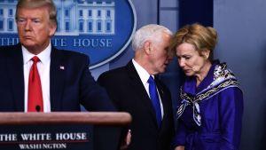 Trump talar på presskonferens, Pence viskar något åt Deborah Birx i bakgrunden