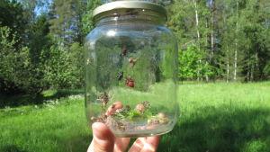 En glasburk med insekter.